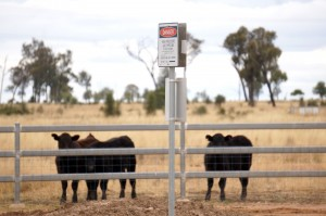 The Narrabri farmers say agriculture and CSG cannot coexist. Source: Thom Mitchell
